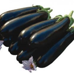 Corsica F1 Patlıcan Fidesi